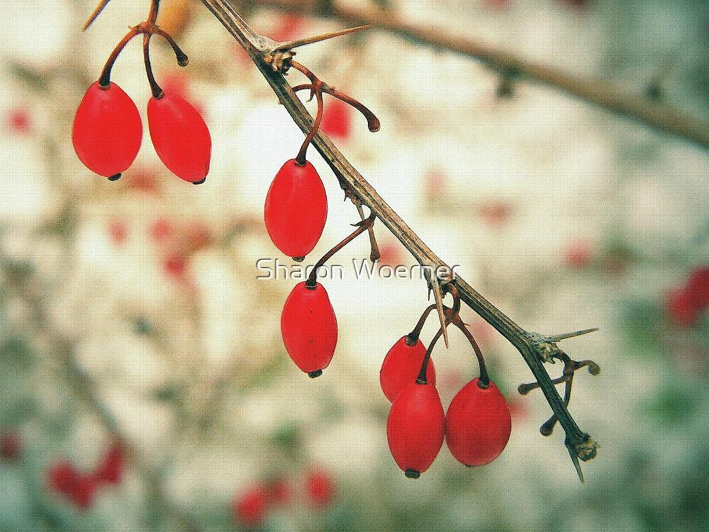 Winter Berries by Sharon Woerner
