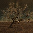 The Leaning Tree by Sherryll  Johnson