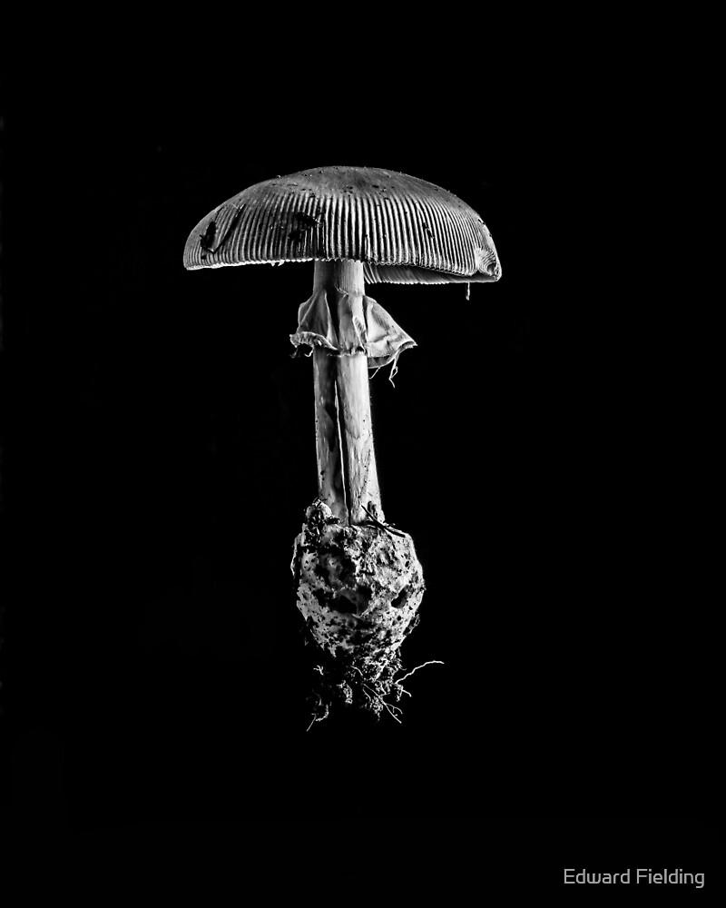 Toad Stool by Edward Fielding