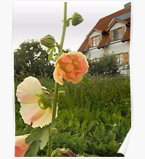 Magnoliophyta - Wurzburg, Germany Poster