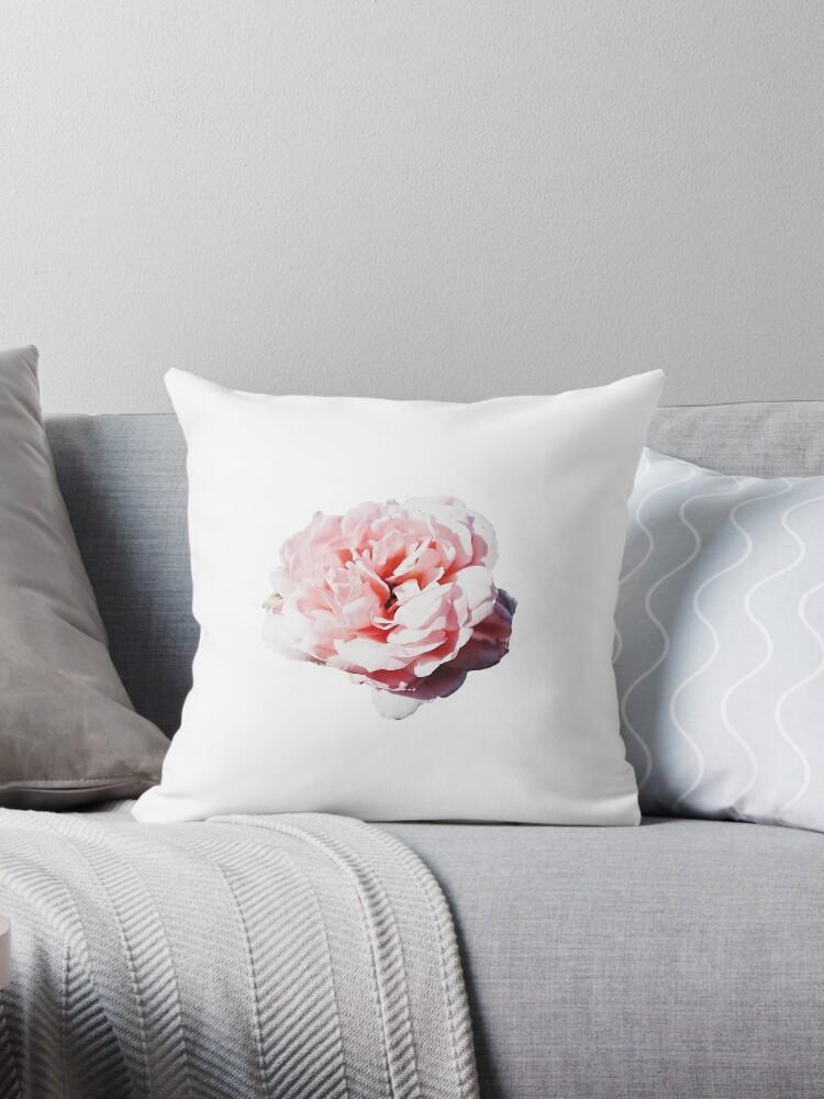 Pink Rose by alegca