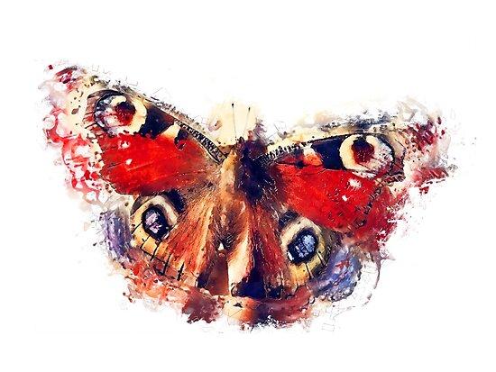 Butterfly - European Peacock by JBJart
