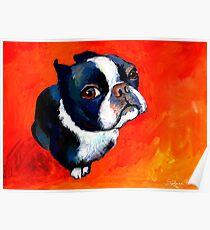 Boston Terrier dog #1 painting Svetlana Novikova Poster