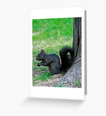 Black Squirrell Greeting Card