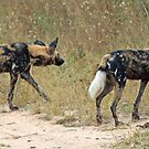 Wild dogs on the hunt by Anthony Goldman