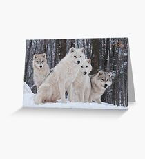 Arctic Wolf Pack Greeting Card