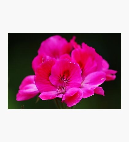 Pink Wonder Photographic Print