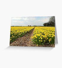 Flowering Daffodils Fields Greeting Card