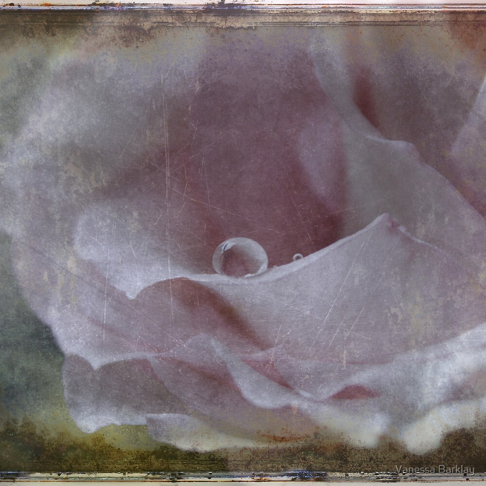 A Droplet of Vintage Rose by Vanessa Barklay