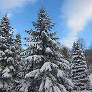 Wint'ry Pines by Grace Anthony Zemsky