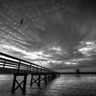 Bird Night at the Dock by Avena Singh