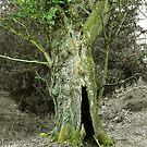 Treebeard! by Susie Hawkins