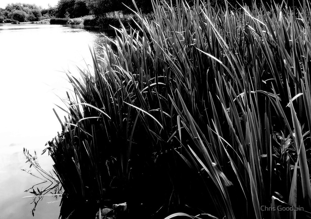 Water Reeds by Chris Goodwin