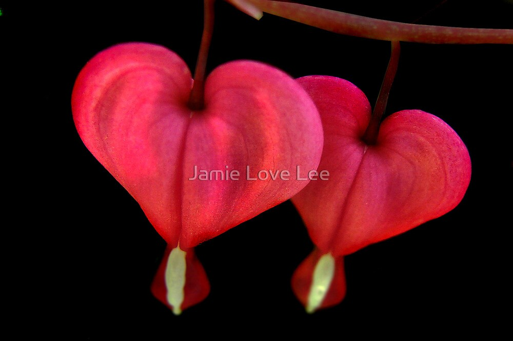 2 of Hearts by Jamie Lee