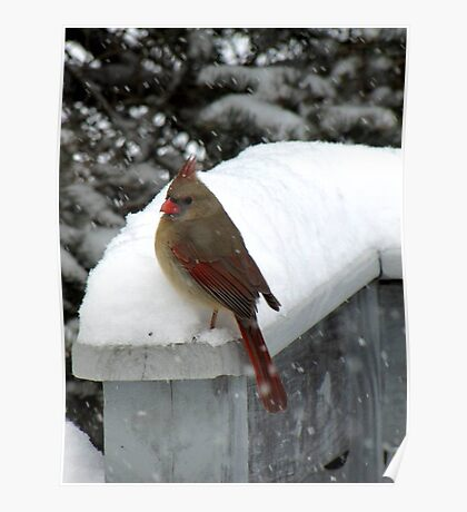 Cardinal in Snow Poster