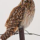 Fierce Lookin Short Eared Owl  by Jean-Paul Fournier
