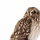Fierce Lookin Short Eared Owl 2 by Jean-Paul Fournier