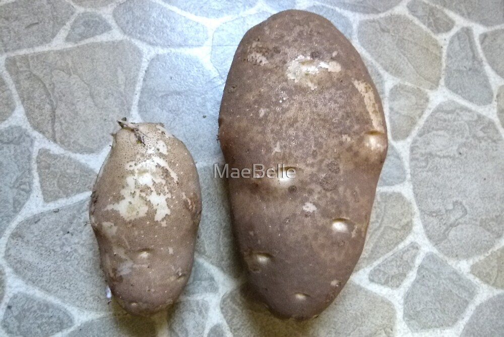 One 'Normal' and One 'Giant'  Potatoes by MaeBelle