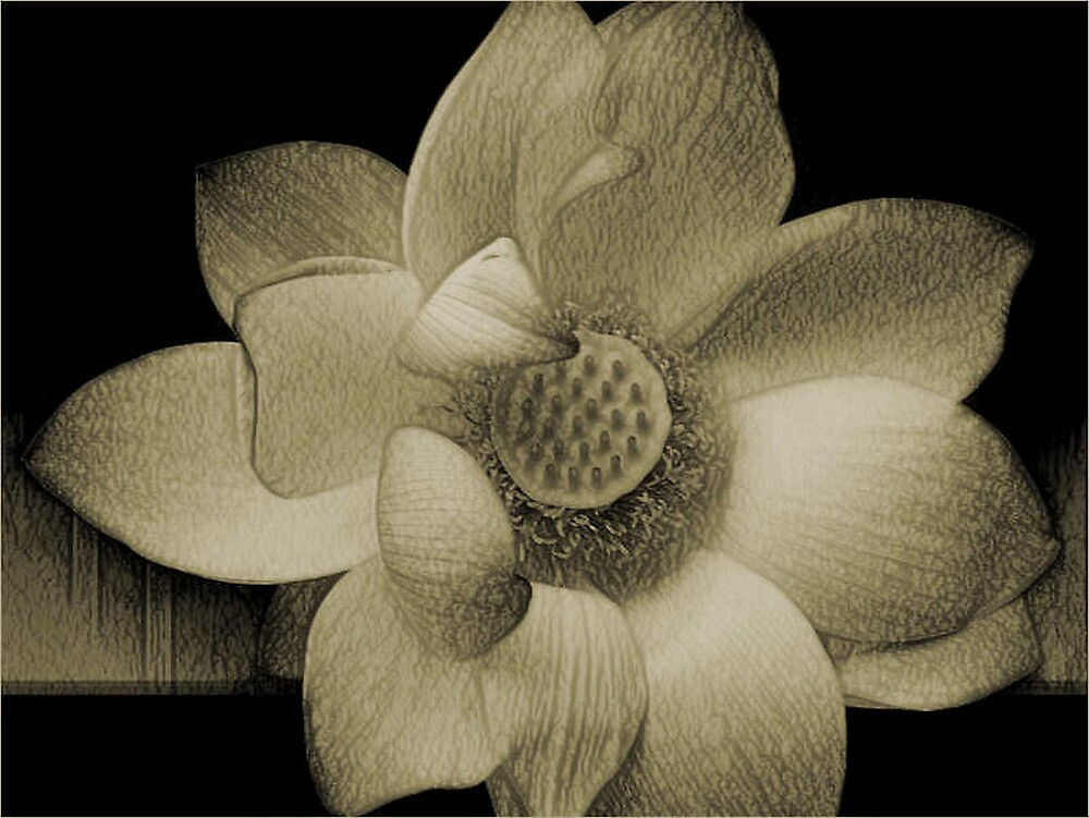 The LoTuS by Carmen Holly