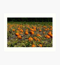 Pumpkins,Pumpkins,Pumpkins! Art Print