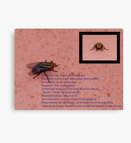 Fly with ruby red eyes Canvas Print