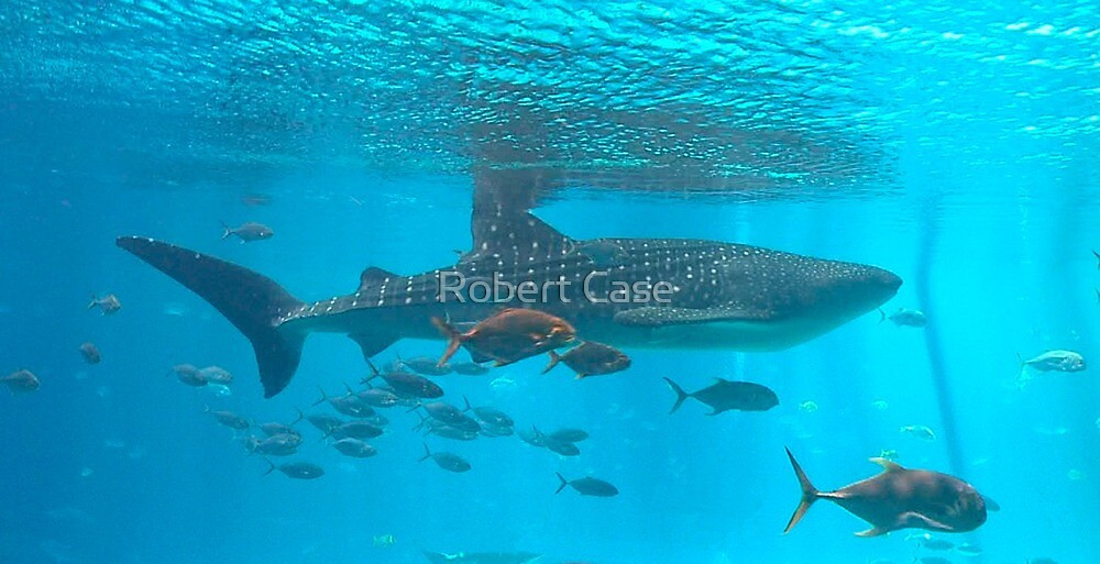 The Biggest Fish by Robert Case