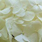 white hydrangeas by ANNABEL   S. ALENTON