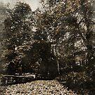Autumn Amblings by Luke Griffin