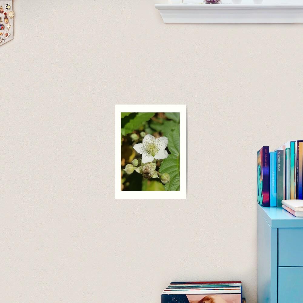 Bramble Blossom Art Print