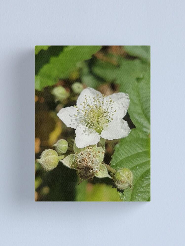 Alternate view of Bramble Blossom Canvas Print