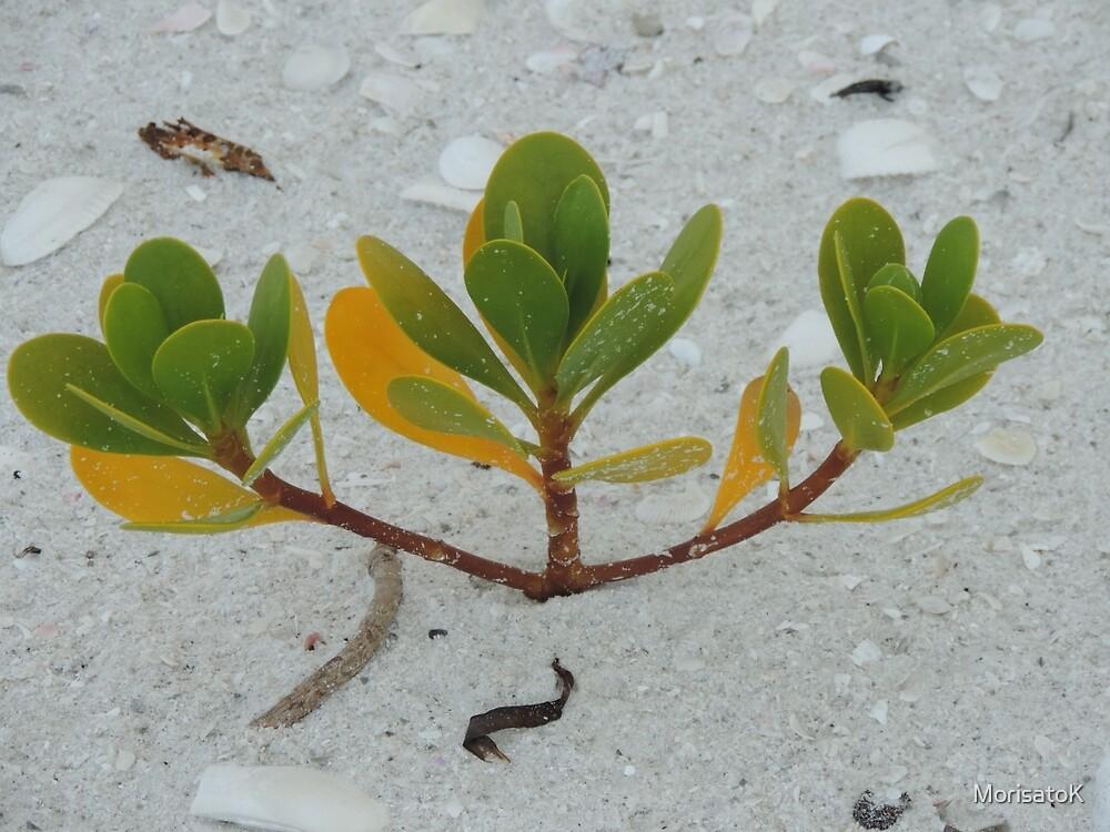 Mangrove Majesty by MorisatoK