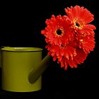 Watering Can and Flowers by Erin Fitzgibbon