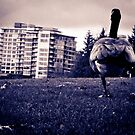 Goose Hop by Lee Potter
