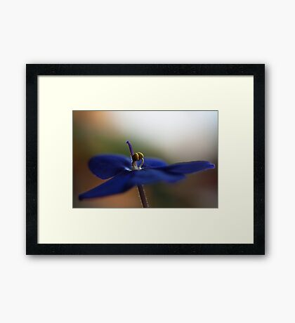 Soft Cape Violet Framed Print