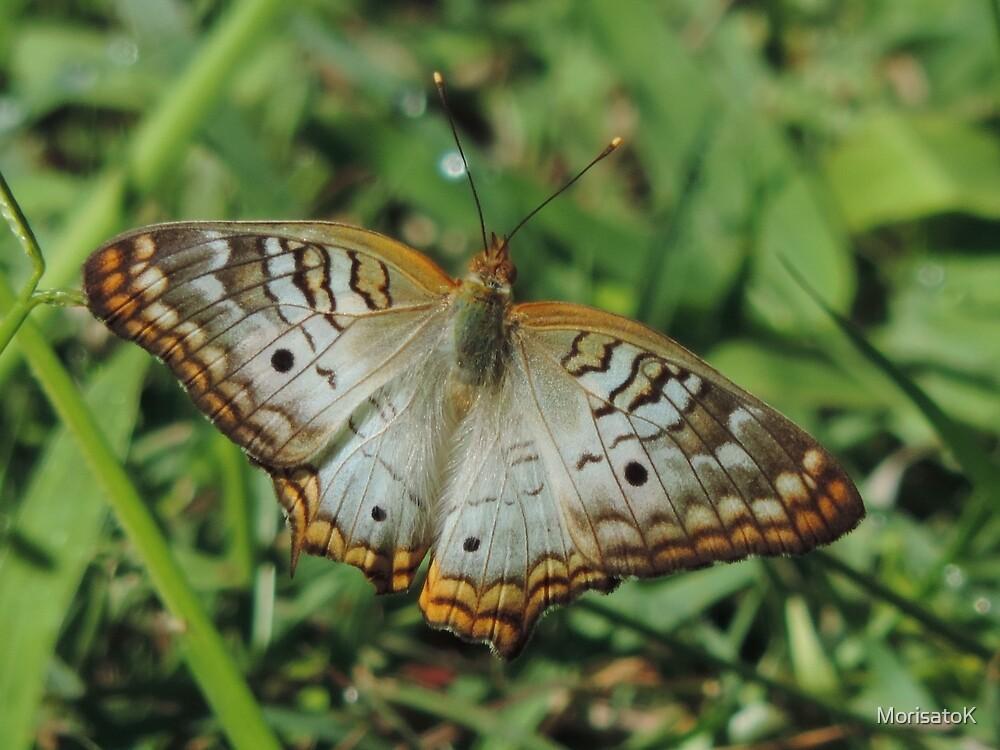 White Peacock Butterfly by MorisatoK