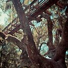 Tree Bridge - Bradenton, Florida by Lindsey Butler