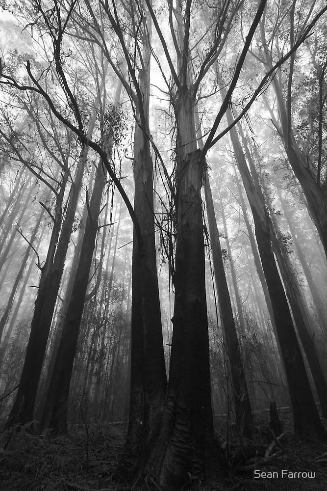 Misty Trees by Sean Farrow