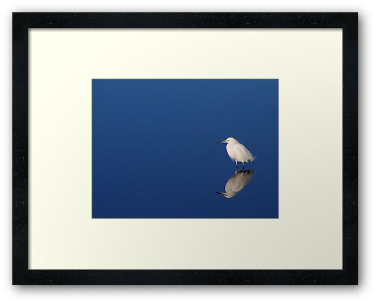 Snowy Egret Blues II by naturalnomad