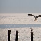 Request for landing -  by NicoleBPhotos