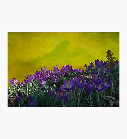 Spring in Washington State Photographic Print