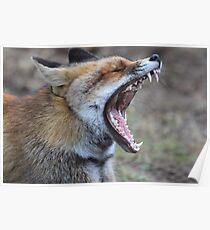 Fox - 1288 Poster
