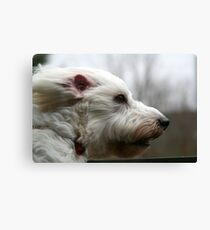 my dog at 40mph Canvas Print