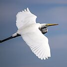 Eastern Great Egret by Doug Cliff