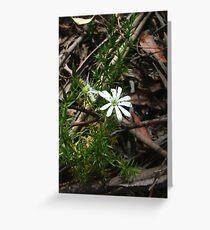 Prickly starwort, Stellaria pungens Greeting Card