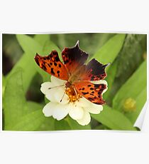 Question Mark Butterfly on Flower Poster