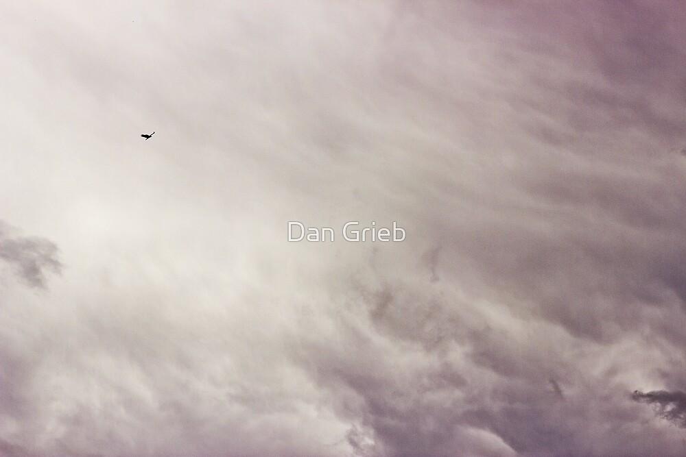 Bird of Prey by Dan Grieb