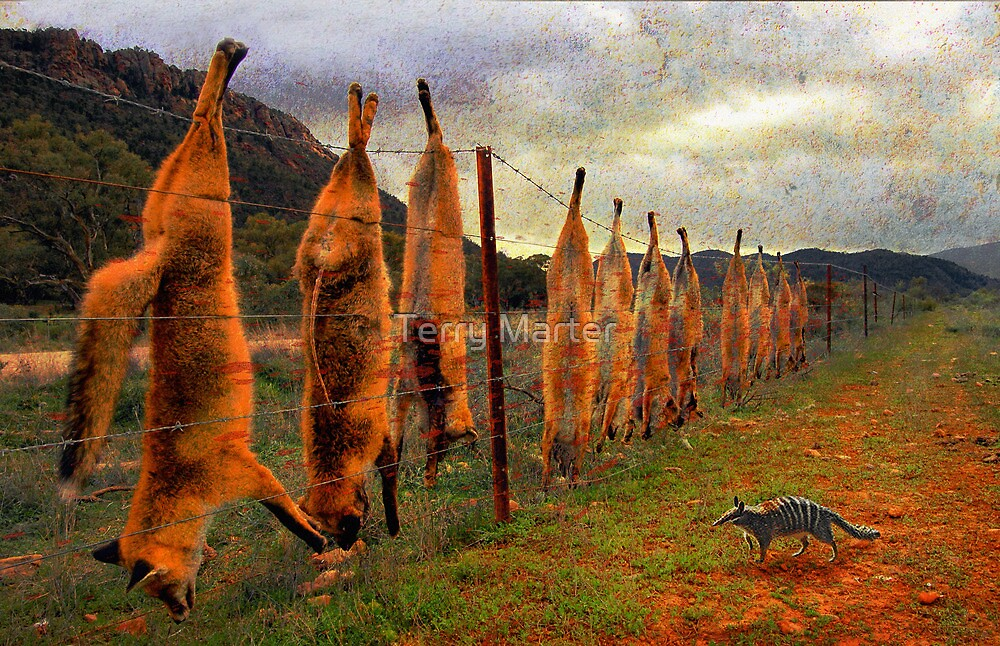 Outfoxed by Terry Marter