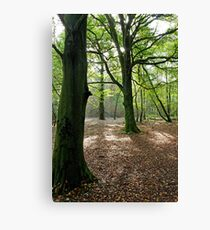 Woodland, Reigate Hill, Surrey Canvas Print