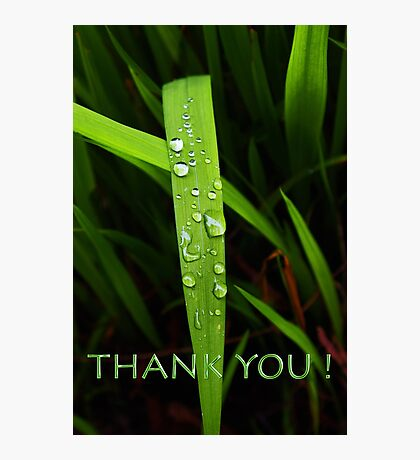 simple grassblade thank you Photographic Print