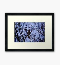 The squirrells looking at me Framed Print